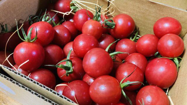 トマトたっぷり